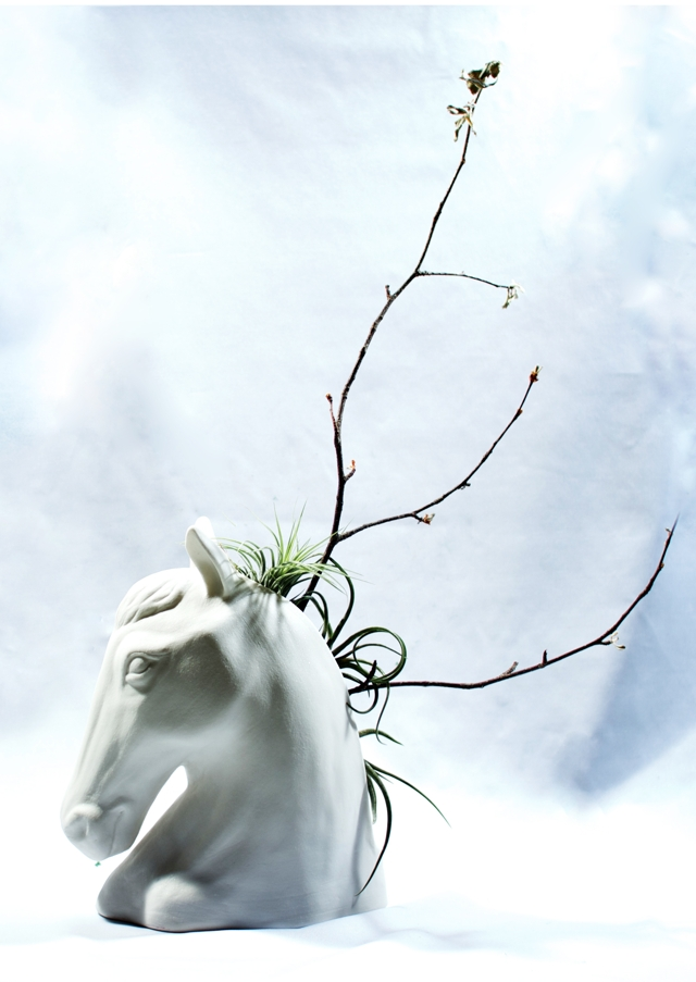 150309horse-09