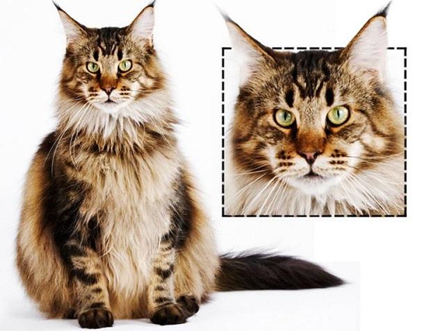 cat face shapes
