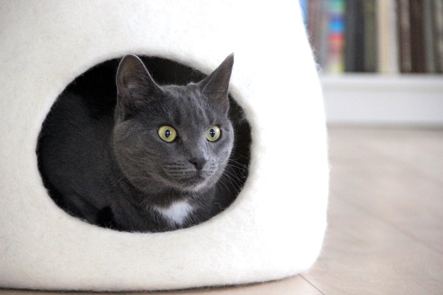 150916catbed03