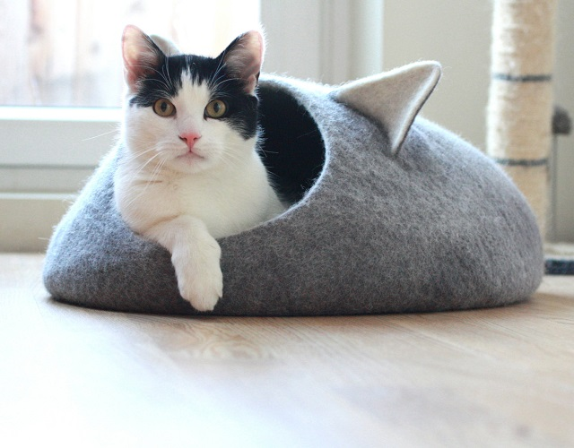 150916catbed04