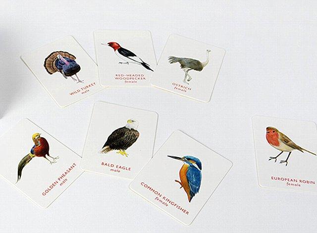 151015ECbirdscard1