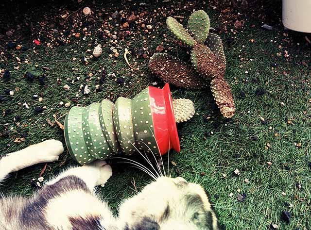 151022_mycactus