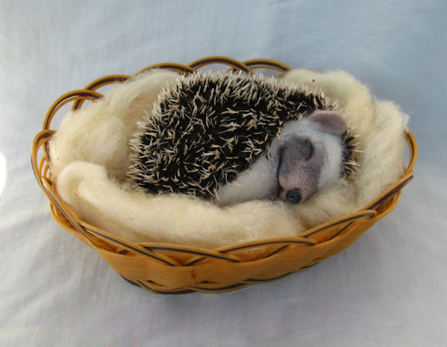 151026_hedgehog2