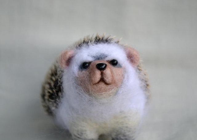 151026_hedgehog3