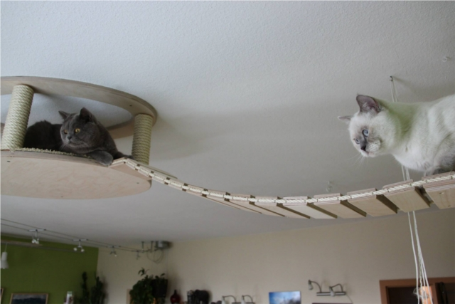 ネコの遊び場を作るGoldtatzeゴールドタッツェ4