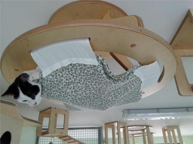 ネコの遊び場を作るGoldtatzeゴールドタッツェ5