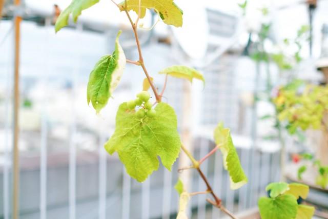 和歌山県のDIYをテーマに地域の人と繋がるおもしろいゲストハウス_4