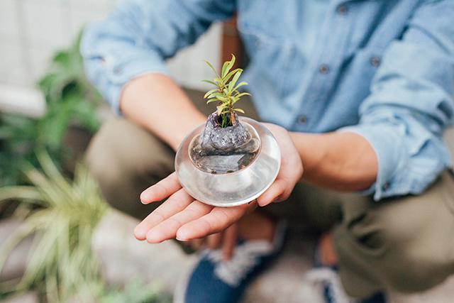杉並区で、思い出を引き継ぐアートで秘密基地のようなセルフリノベーションの苔や植物_2