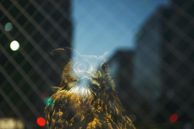 東京八丁堀で夜を楽しむおしゃれなホステルWISE OWL HOSTELS TOKYO_3