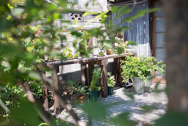 上野桜木あたりという古き良き日本の家である古民家のリノベについてkurachiffonの瀧内未来さんにインタビューの植物