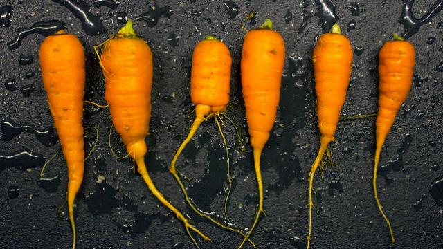 「すぐ枯らしてしまう」性格なためなかなか家庭菜園を続けられない人のための、育てやすい野菜と、その詳しい育て方をご紹介。レタスなどの葉野菜、トマト、キュウリ、ニンジン、カブ、ラディッシュ、サヤインゲン、ズッキーニなど。これさえ読めば、家庭菜園マスターになれるでしょう。4