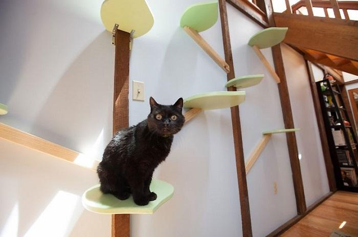 アメリカにクラス猫好きの2人組が愛ネコの為に改造した家の紹介。手がけたのは米国でハンドメイド・キャットタワーを販売するMountain PET Productsのレベッカさん。人間の生活の邪魔にならないスペースにキャットタワーとキャットウォークを作りました4
