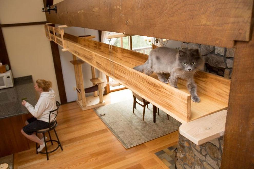 アメリカにクラス猫好きの2人組が愛ネコの為に改造した家の紹介。手がけたのは米国でハンドメイド・キャットタワーを販売するMountain PET Productsのレベッカさん。人間の生活の邪魔にならないスペースにキャットタワーとキャットウォークを作りました2
