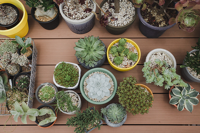 植物とカメラとスケボーとコンバースオールスターが趣味のアパレルブランドで働くデッキとロフト付きのおしゃれな緒方裕さんの部屋_9