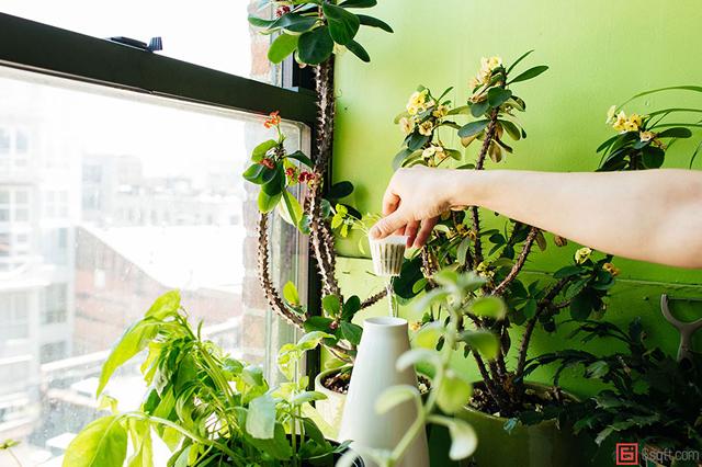 ニューヨーク在住のモデルのSUMMER RAYNE OAKESさんは、観葉植物、多肉植物、ハーブ、野菜など、500もの多種多様な植物と生活しているそうです。そんな彼女の都会で植物と共生する暮らし、覗いてみませんか?2