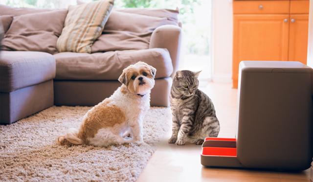 餌が少なくなったら自動で注文してくれる餌やりマシーン「easyFeed」の紹介です。餌を自動で注文するという、ほかの餌やりマシーンにはない機能で飼い主をサポート。空いた時間で、ペットにたっぷりの愛情を注いであげられそうです。<br /> 6