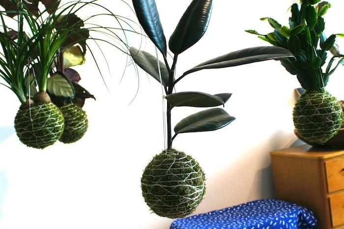 日本から8,600キロメートル以上も離れたスウェーデン南部の都市、マルメでは、盆栽の根洗いという手法を応用してつくる「こけ玉」が、最近沸々と話題になっているようです。日本とは全く違うスウェーデンの文化で育ったFlora Lineaさんがニッポンの盆栽に魅了された理由とは?